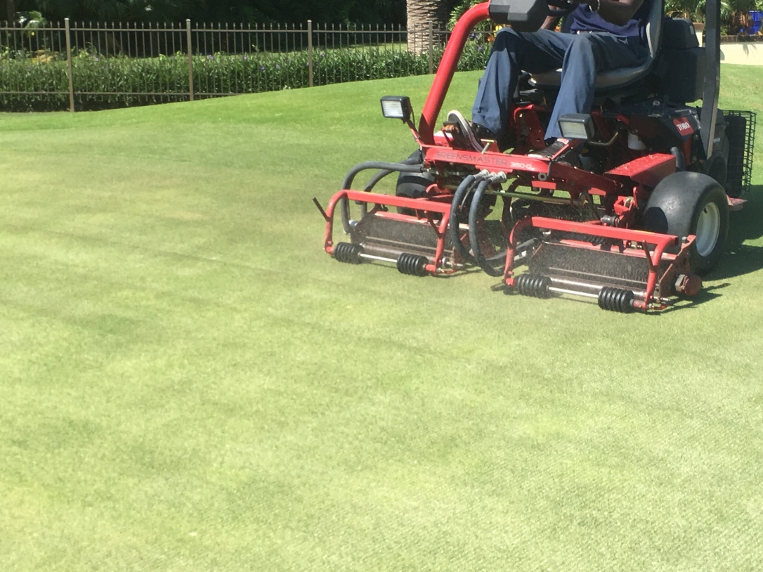 "Vertical mowing ""verticutting"""